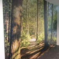 Laminovaná fototapeta potištěná barevnou fotografií lesní cesty nalepená na zdi, bílý strop, šedá podlaha